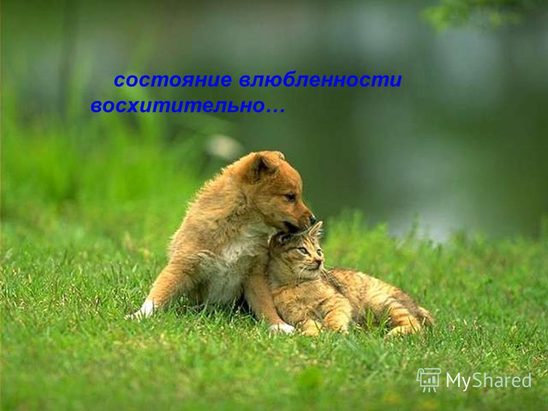 состояние влюбленности восхитительно…