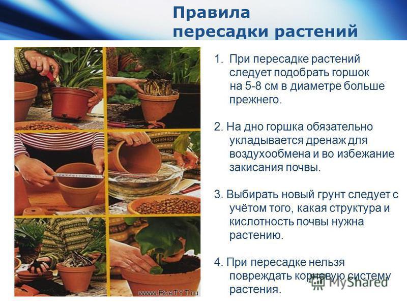 www.themegallery.com Company Logo 1. При пересадке растений следует подобрать горшок на 5-8 см в диаметре больше прежнего. 2. На дно горшка обязательно укладывается дренаж для воздухообмена и во избежание закисания почвы. 3. Выбирать новый грунт след