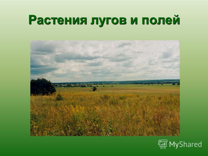 Растения лугов и полей