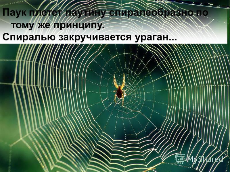 Паук плетет паутину спиралеобразно по тому же принципу. Спиралью закручивается ураган...