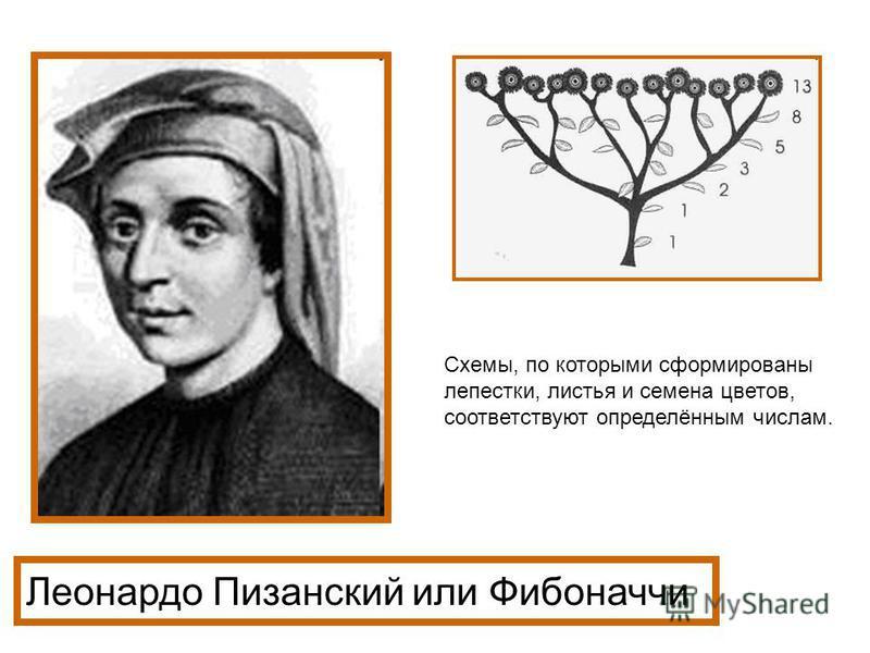 Леонардо Пизанский или Фибоначчи Схемы, по которыми сформированы лепестки, листья и семена цветов, соответствуют определённым числам.