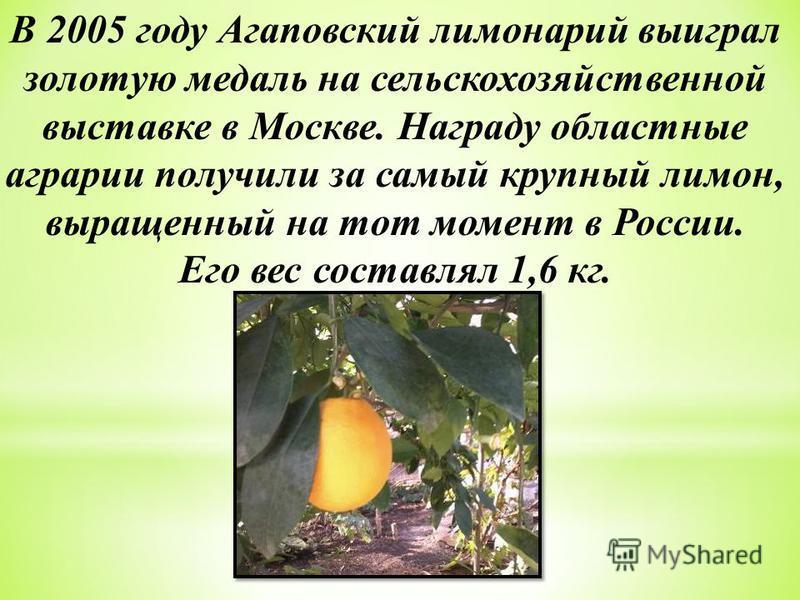 В 2005 году Агаповский лимонарий выиграл золотую медаль на сельскохозяйственной выставке в Москве. Награду областные аграрии получили за самый крупный лимон, выращенный на тот момент в России. Его вес составлял 1,6 кг.