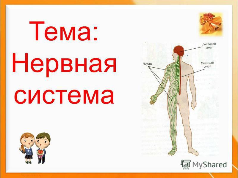 Тема: Нервная система