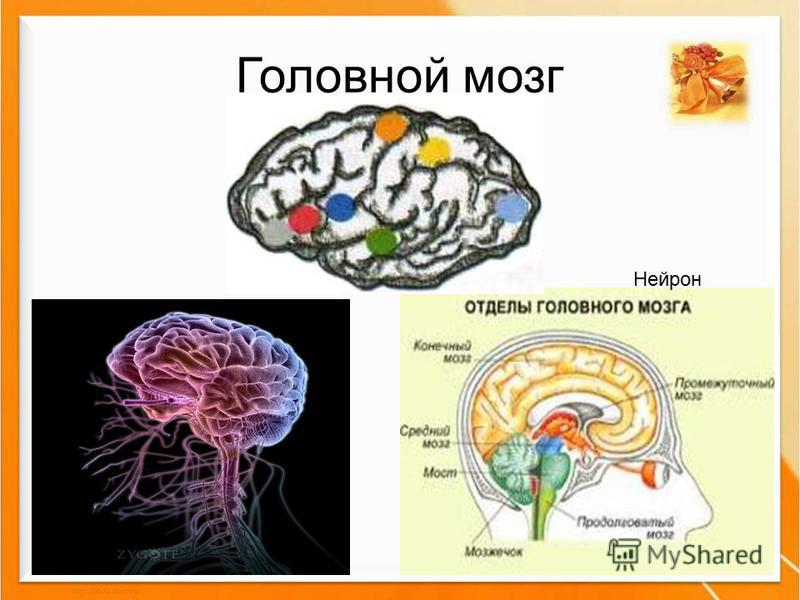 Головной мозг Нейрон