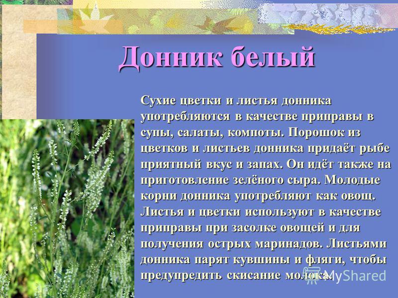 Донник белый Сухие цветки и листья донника употребляются в качестве приправы в супы, салаты, компоты. Порошок из цветков и листьев донника придаёт рыбе приятный вкус и запах. Он идёт также на приготовление зелёного сыра. Молодые корни донника употреб