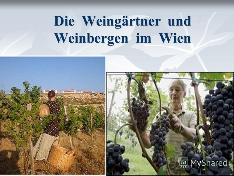 Die Weingärtner und Weinbergen im Wien