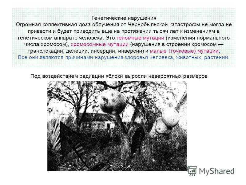 Генетические нарушения Огромная коллективная доза облучения от Чернобыльской катастрофы не могла не привести и будет приводить еще на протяжении тысяч лет к изменениям в генетическом аппарате человека. Это геномные мутации (изменения нормального числ