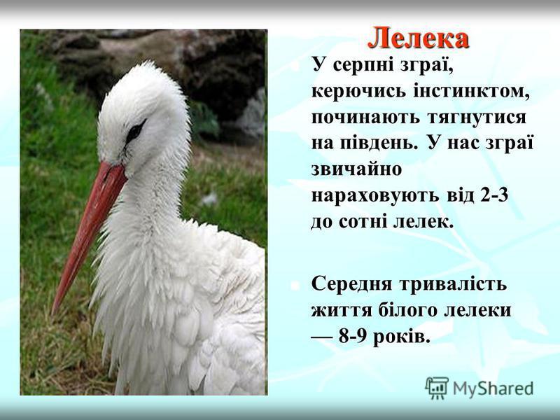 Грак Граки керуються не тільки інстинктами, а й інтелектом. Розум птахи виявляють у розумінні деяких фізичних процесів та умінні рахувати кількість речей.