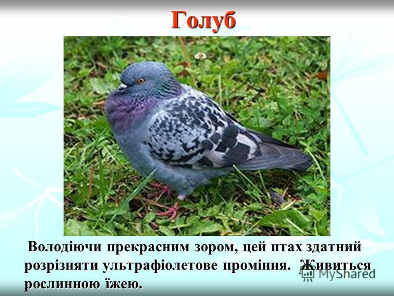 Осілі птахи Сова Живиться мишовидними гризунами, рідше - комахами, птахами та жабами.Живе в Поліссі, Лісостепу, Криму й Карпатах. Живиться мишовидними гризунами, рідше - комахами, птахами та жабами.Живе в Поліссі, Лісостепу, Криму й Карпатах. Корисни