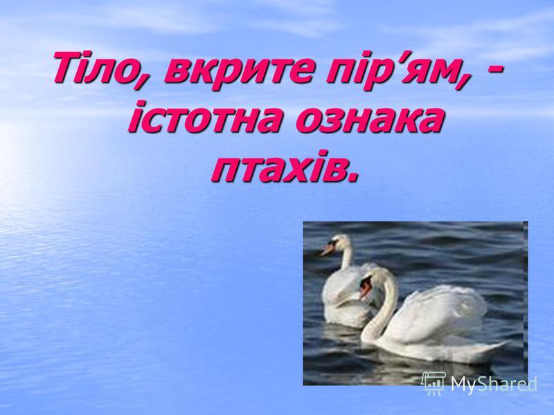 В Україні налічується близько 360 видів птахів. Життя птахів пов'язане з лугами, полями, болотами, берегами водойм, відкритими ділянками води. Велика частина видів мешканці лісу.