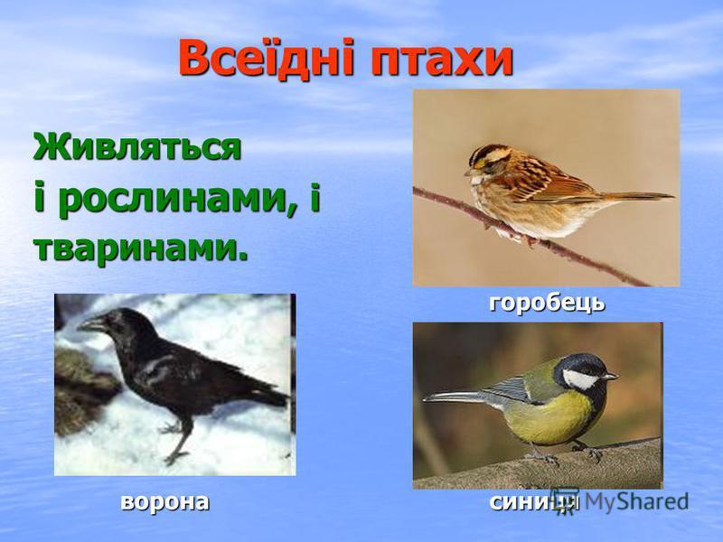 Хижі птахи Живляться іншими тваринами. Мають міцний дзьоб, гострі кігті, які служать для вбивства здобичі. яструбсова орел