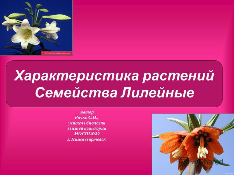 Автор Рачко С.Н., учитель биологии высшей категории МОСШ 29 г. Нижневартовск. Характеристика растений Семейства Лилейные