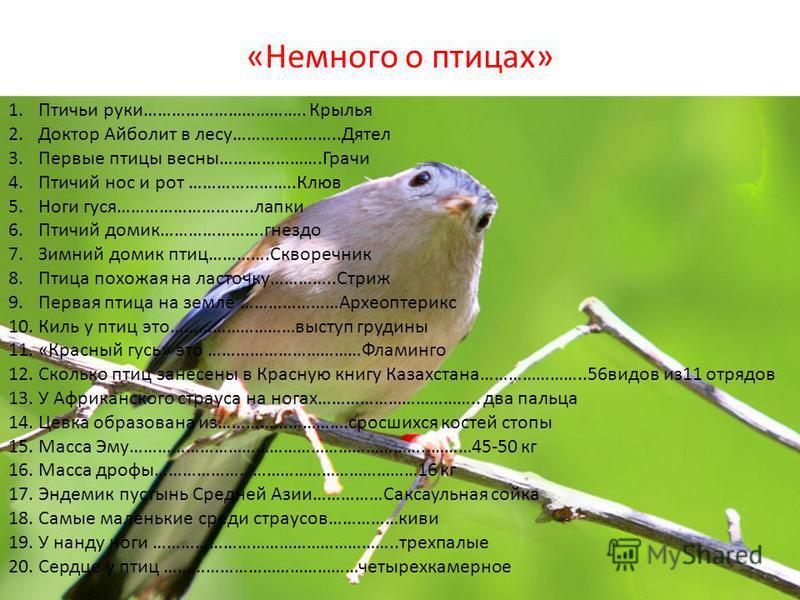 «Немного о птицах» 1. Птичьи руки…………………………….. Крылья 2. Доктор Айболит в лесу…………………..Дятел 3. Первые птицы весны………………….Грачи 4. Птичий нос и рот …………………..Клюв 5. Ноги гуся………………………..лапки 6. Птичий домик………………….гнездо 7. Зимний домик птиц………….Скво