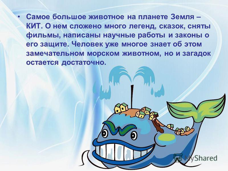Самое большое животное на планете Земля – КИТ. О нем сложено много легенд, сказок, сняты фильмы, написаны научные работы и законы о его защите. Человек уже многое знает об этом замечательном морском животном, но и загадок остается достаточно.