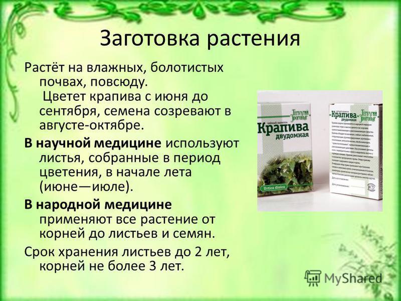 Заготовка растения Растёт на влажных, болотистых почвах, повсюду. Цветет крапива с июня до сентября, семена созревают в августе-октябре. В научной медицине используют листья, собранные в период цветения, в начале лета (июне июле). В народной медицине
