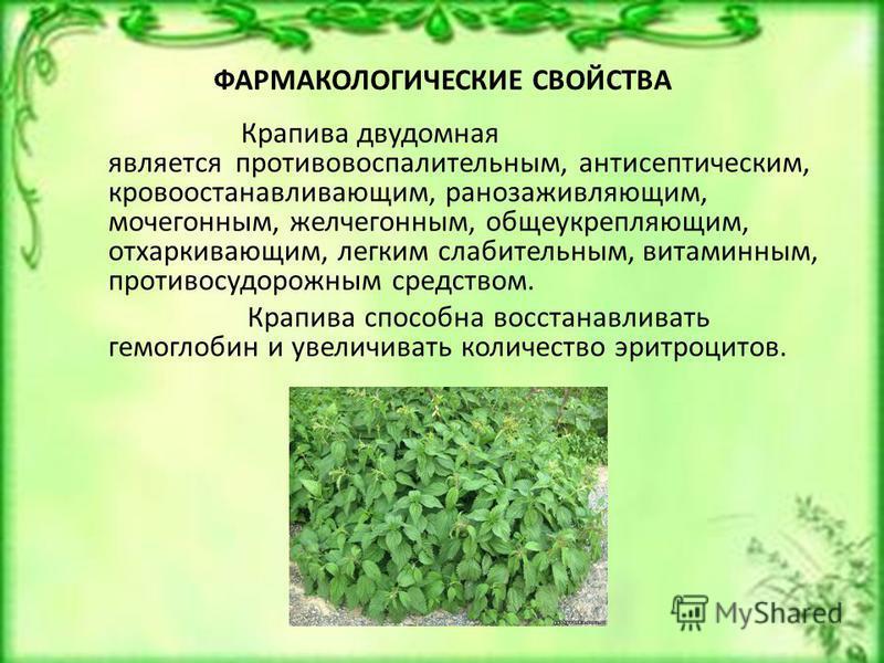 ФАРМАКОЛОГИЧЕСКИЕ СВОЙСТВА Крапива двудомная является противовоспалительным, антисептическим, кровоостанавливающим, ранозаживляющим, мочегонным, желчегонным, общеукрепляющим, отхаркивающим, легким слабительным, витаминным, противосудорожным средством