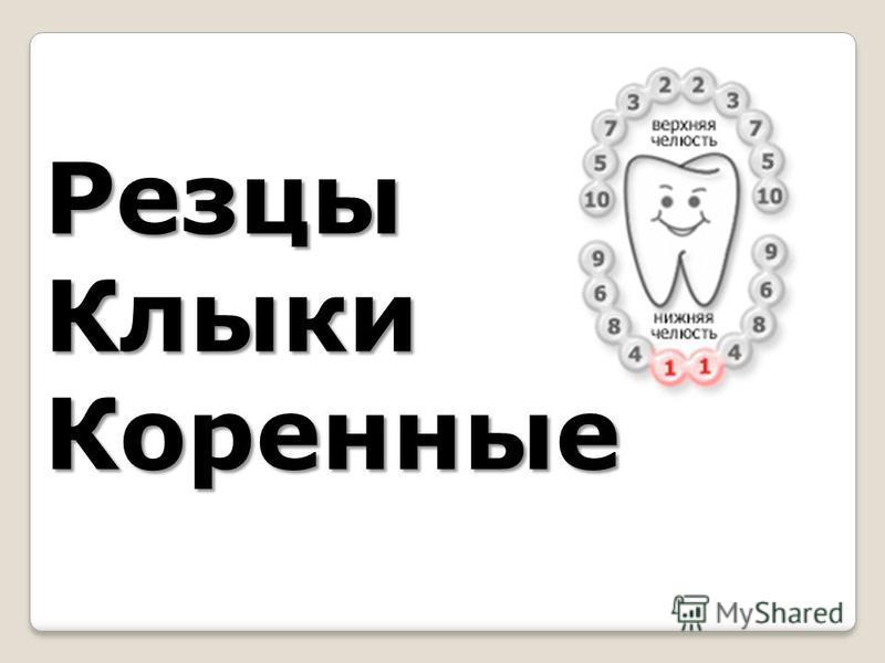 Резцы КлыкиКоренные