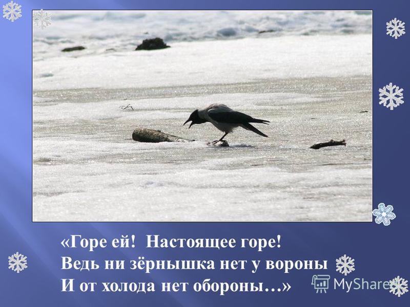 «Горе ей! Настоящее горе! Ведь ни зёрнышка нет у вороны И от холода нет обороны…»