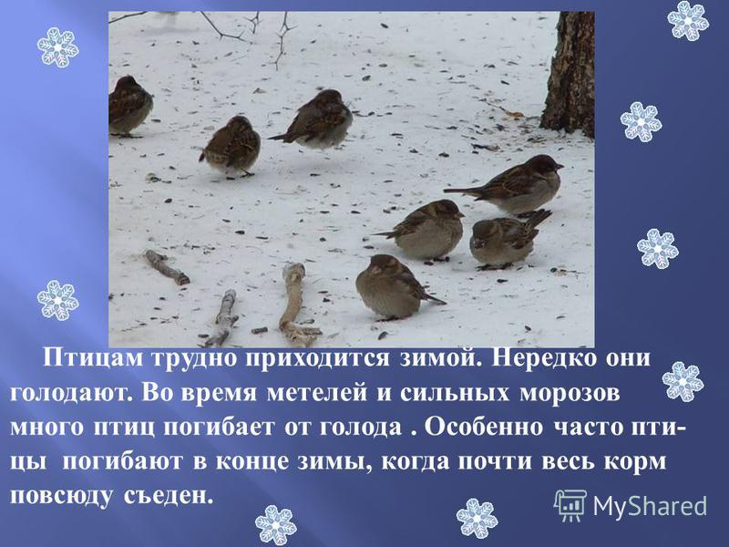 Птицам трудно приходится зимой. Нередко они голодают. Во время метелей и сильных морозов много птиц погибает от голода. Особенно часто пти- цы погибают в конце зимы, когда почти весь корм повсюду съеден.