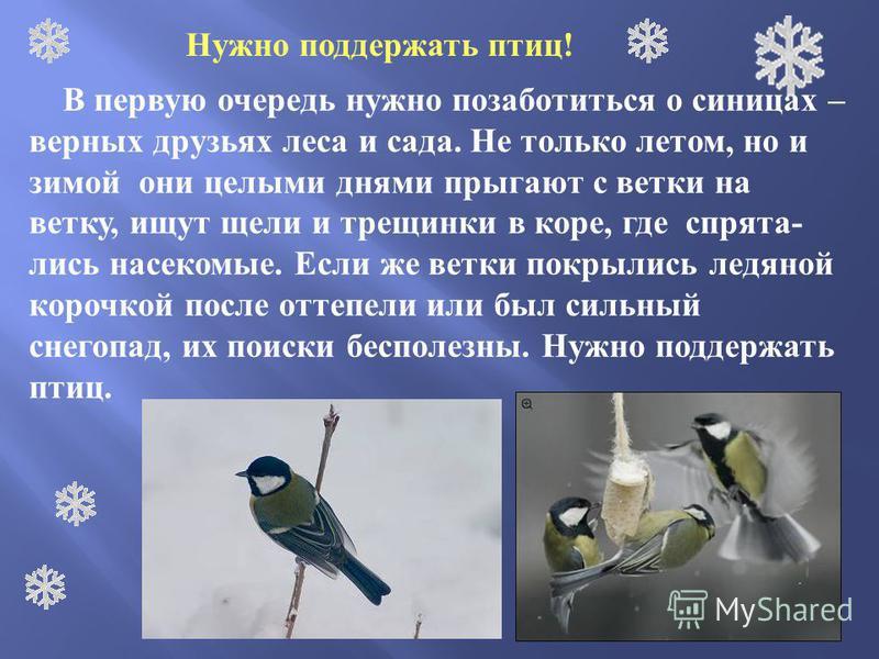 Нужно поддержать птиц! В первую очередь нужно позаботиться о синицах – верных друзьях леса и сада. Не только летом, но и зимой они целыми днями прыгают с ветки на ветку, ищут щели и трещинки в коре, где спрятались насекомые. Если же ветки покрылись л