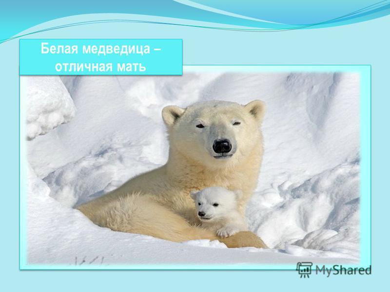 Белая медведица – отличная мать