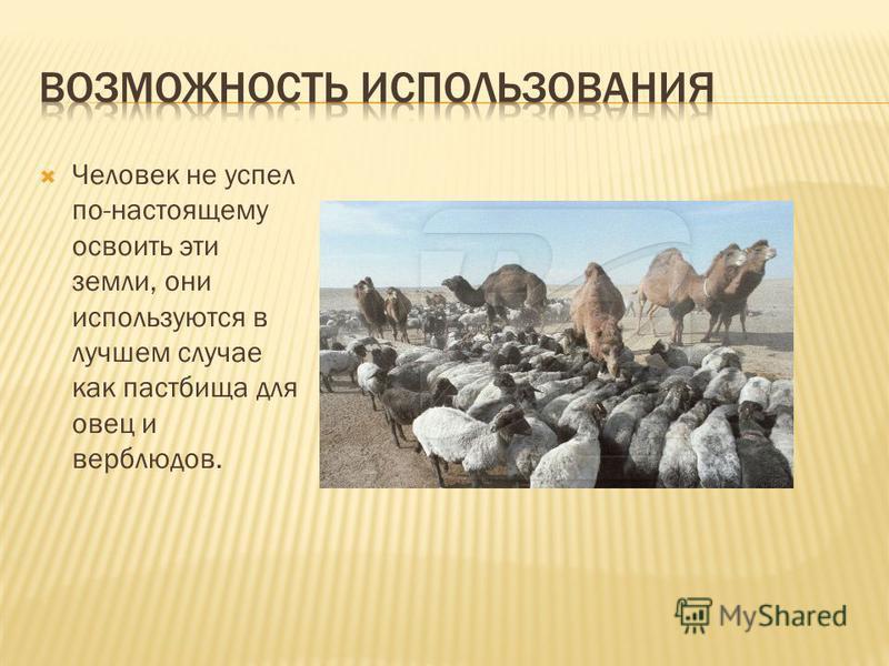Человек не успел по-настоящему освоить эти земли, они используются в лучшем случае как пастбища для овец и верблюдов.