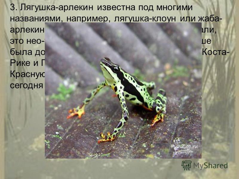3. Лягушка-арлекин известна под многими названиями, например, лягушка-клоун или жаба- арлекин Коста-Рики. Как бы вы ее не называли, это нео-тропическая лягушка, которая раньше была довольно распространенным видом в Коста- Рике и Панаме. Сейчас этот в