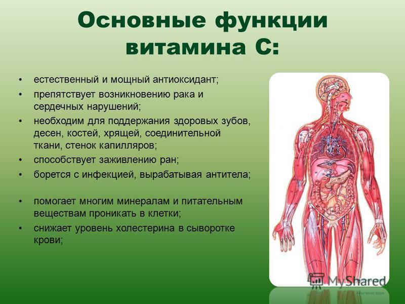 Основные функции витамина С: естественный и мощный антиоксидант; препятствует возникновению рака и сердечных нарушений; необходим для поддержания здоровых зубов, десен, костей, хрящей, соединительной ткани, стенок капилляров; способствует заживлению