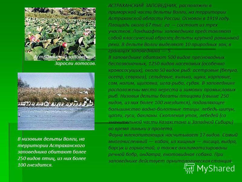 АСТРАХАНСКИЙ ЗАПОВЕДНИК, расположен в приморской части дельты Волги, на территории Астраханской области России. Основан в 1919 году. Площадь около 67 тыс. га состоит из трех участков. Ландшафты заповедника представляют собой классический образец дель