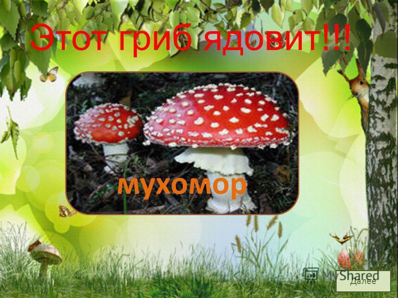 На грибы она сердита И от злости ядовита. Вот лесная хулиганка! Это бледная... поганка Далее Этот гриб ядовит!!!