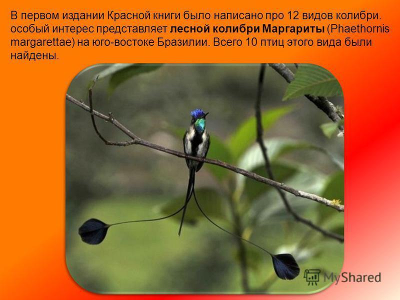 Ура! Птенец колибри вылупился из яичка. Он очень крошечный и совсем беспомощный. У него нет перьев и он не может ходить и летать. Его мама принесет ему капельку нектара или букашку в клювике.