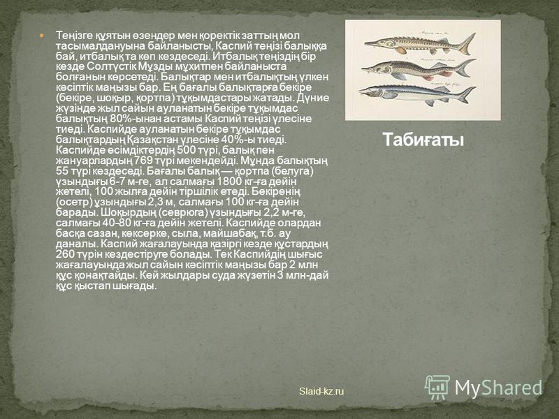 Климаты Slaid-kz.ru