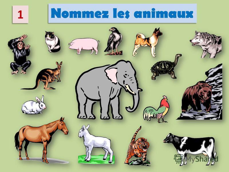 1 1 Nommez les animaux