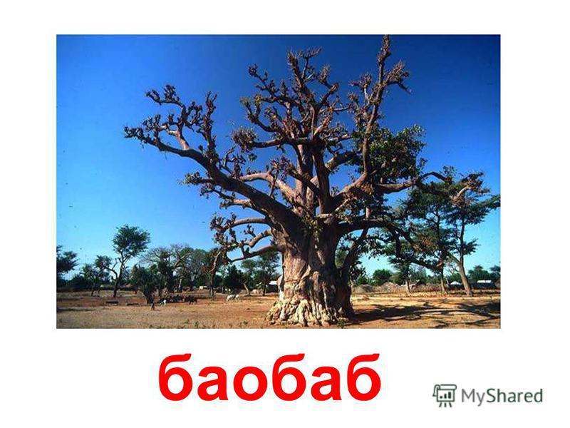 пальмы Пальмы.
