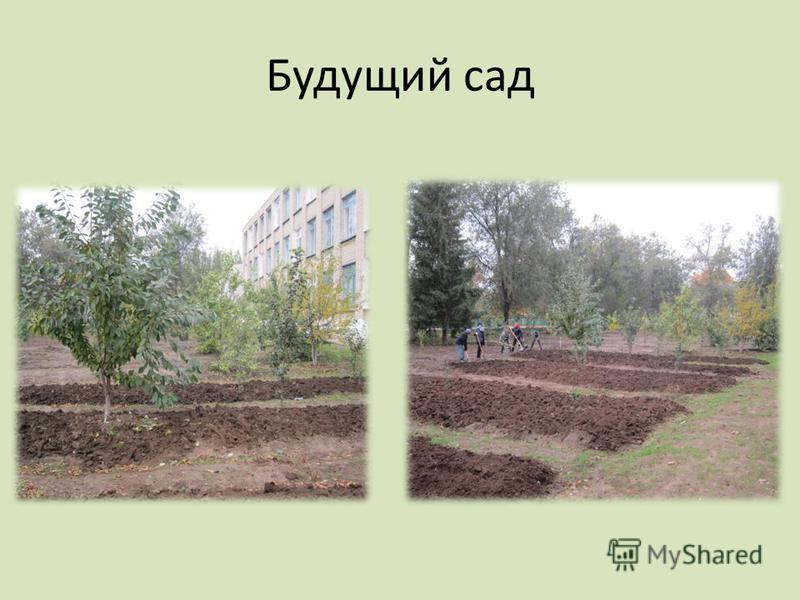 Будущий сад