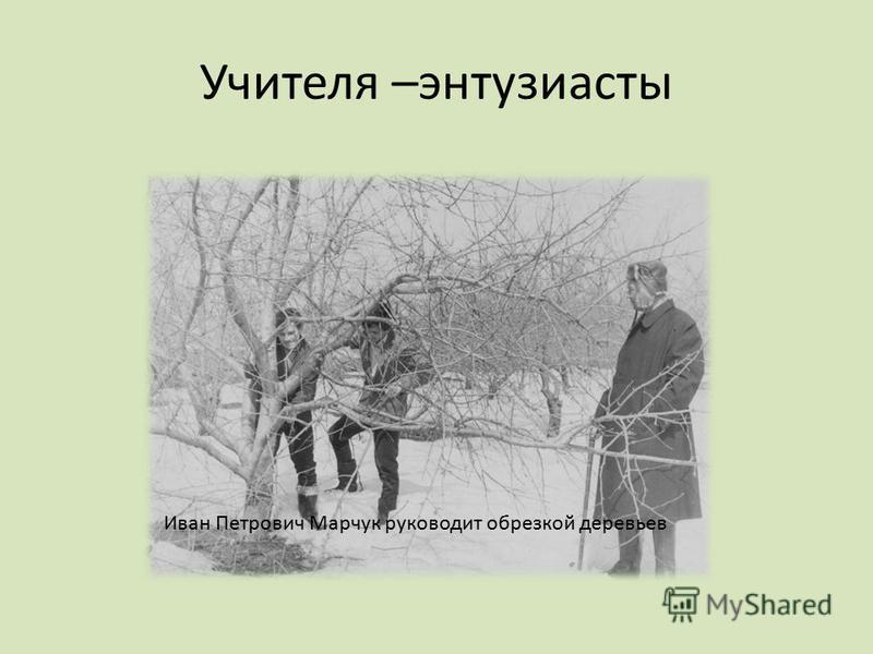 Учителя –энтузиасты Иван Петрович Марчук руководит обрезкой деревьев