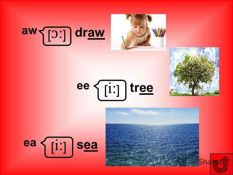 [ɔ:][ɔ:] aw draw [ i: ] ee tree [ i: ] ea sea