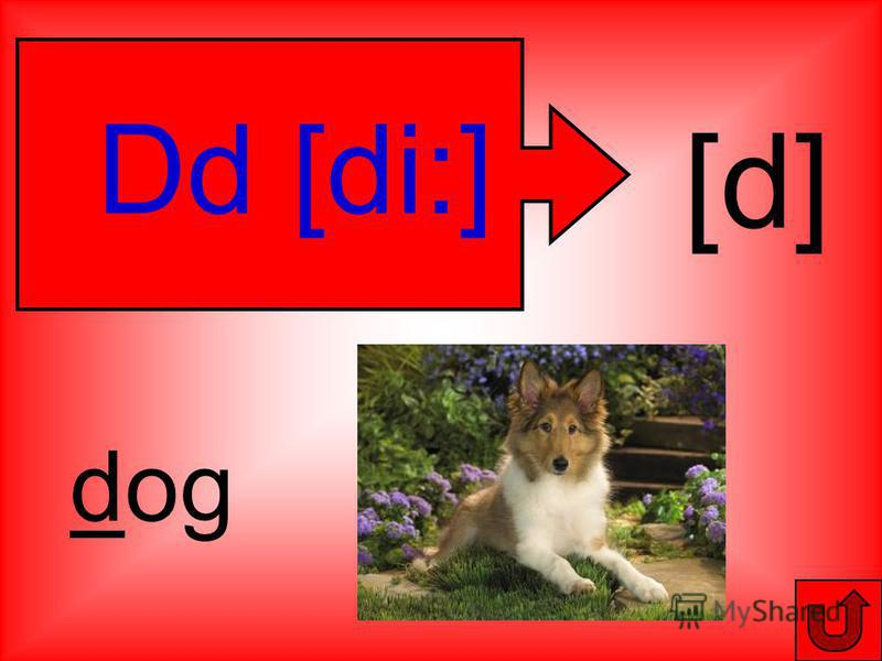Dd [di:] [d] dog