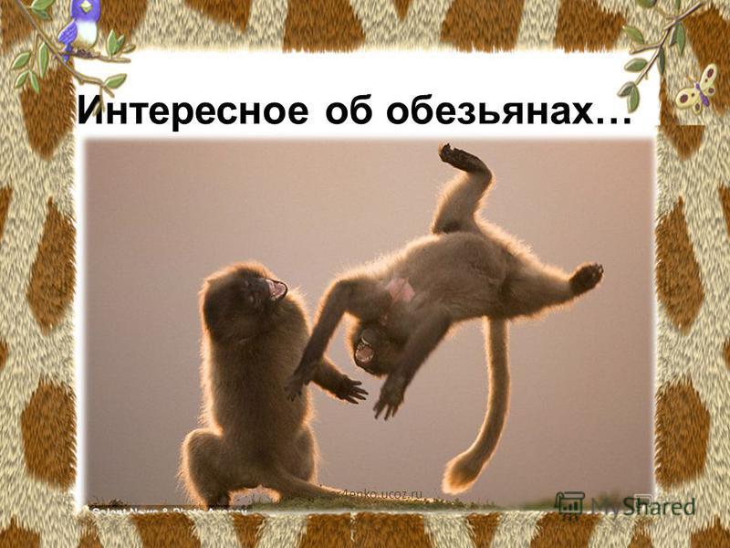 Интересное об обезьянах… vikaver4enko.ucoz.ru