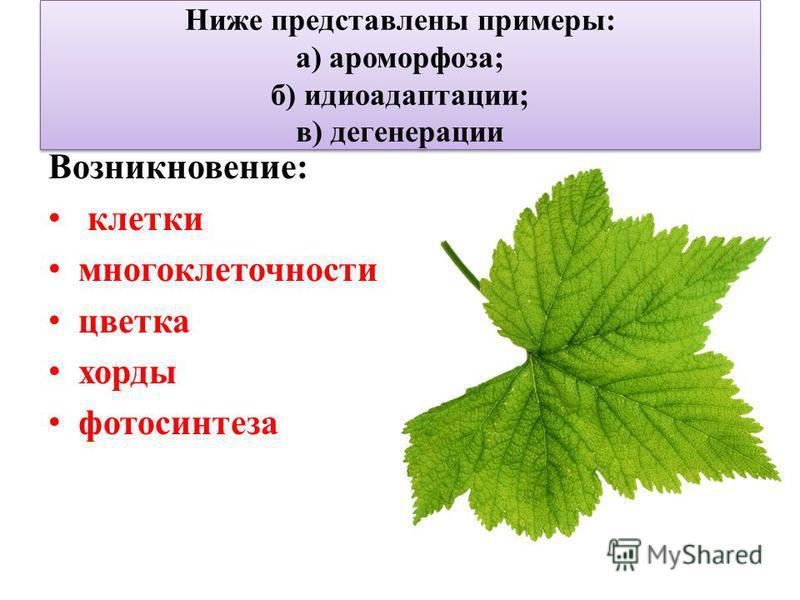 Ниже представлены примеры: а) ароморфоза; б) идиоадаптации; в) дегенерации Возникновение: клетки многоклеточности цветка хорды фотосинтеза