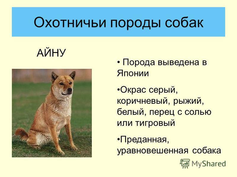 АЙНУ Охотничьи породы собак Порода выведена в Японии Окрас серый, коричневый, рыжий, белый, перец с солью или тигровый Преданная, уравновешенная собака