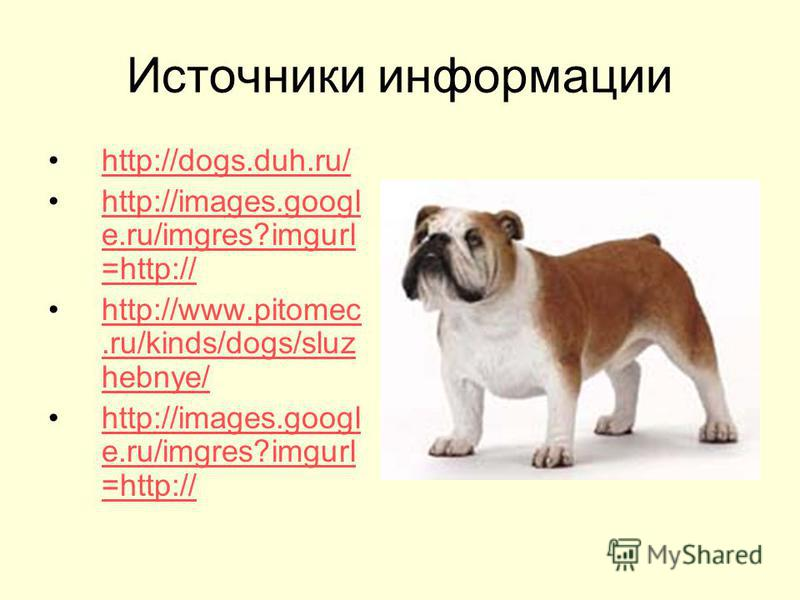 Источники информации http://dogs.duh.ru/ http://images.googl e.ru/imgres?imgurl =http://http://images.googl e.ru/imgres?imgurl =http:// http://www.pitomec.ru/kinds/dogs/sluz hebnye/http://www.pitomec.ru/kinds/dogs/sluz hebnye/ http://images.googl e.r