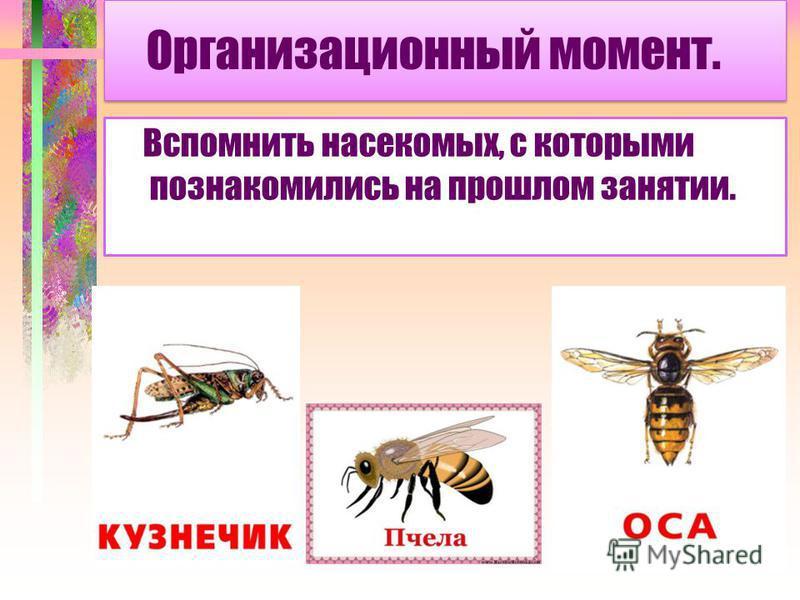 Организационный момент. Вспомнить насекомых, с которыми познакомились на прошлом занятии.