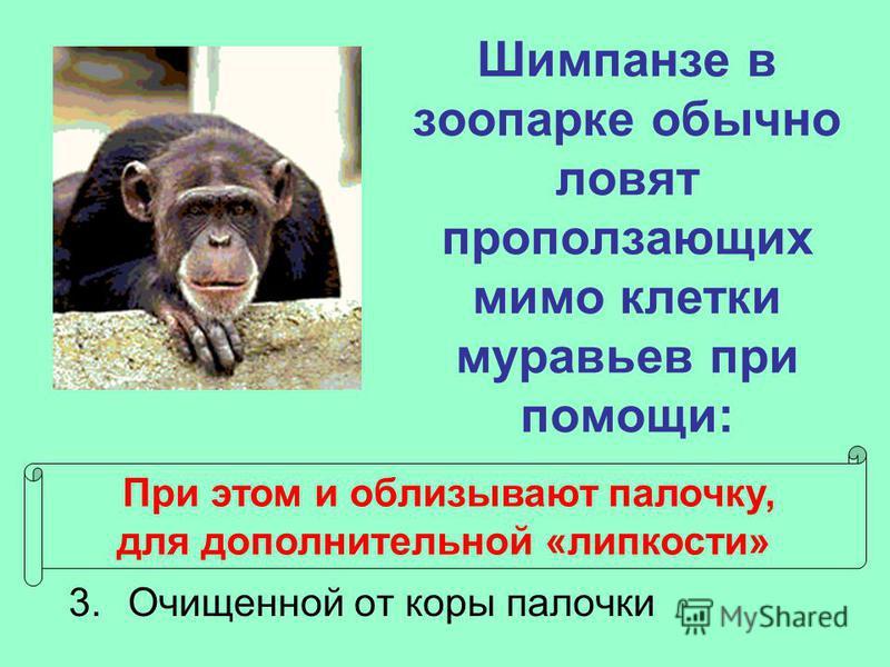 Шимпанзе в зоопарке обычно ловят проползающих мимо клетки муравьев при помощи: 1. Миски с пищей, оставленной на ночь 2. Дорожки из крошек еды 3. Очищенной от коры палочки При этом и облизывают палочку, для дополнительной «липкости»