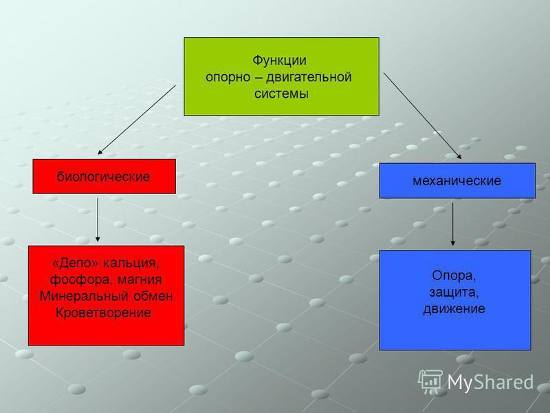 Функции опорно – двигательной системы биологические механические «Депо» кальция, фосфора, магния Минеральный обмен Кроветворение Опора, защита, движение