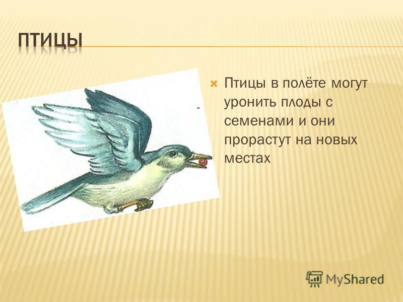 Птицы в полёте могут уронить плоды с семенами и они прорастут на новых местах