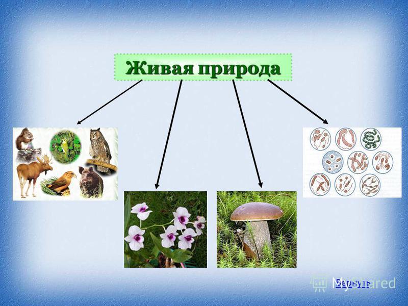 Живая природа Животные Человек Растения Бактерии Грибы Вернуть