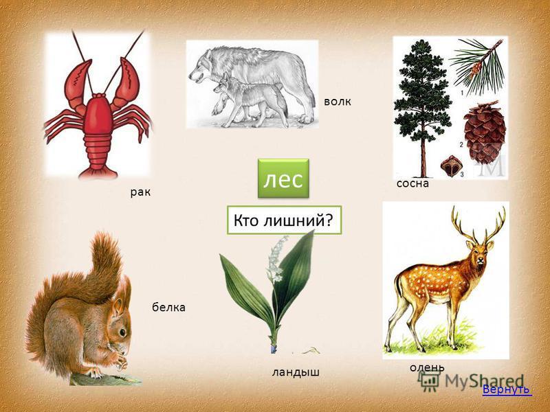 лес Кто лишний? рак белка волк ландыш сосна олень Вернуть