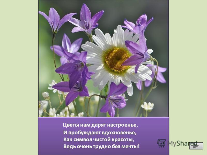 Знаешь ли ты цветы, занесенные в Красную книгу? Назови и проверь себя, щёлкнув мышкой по изображению Подснежник Горицвет Купальница Простре л Кувшинка