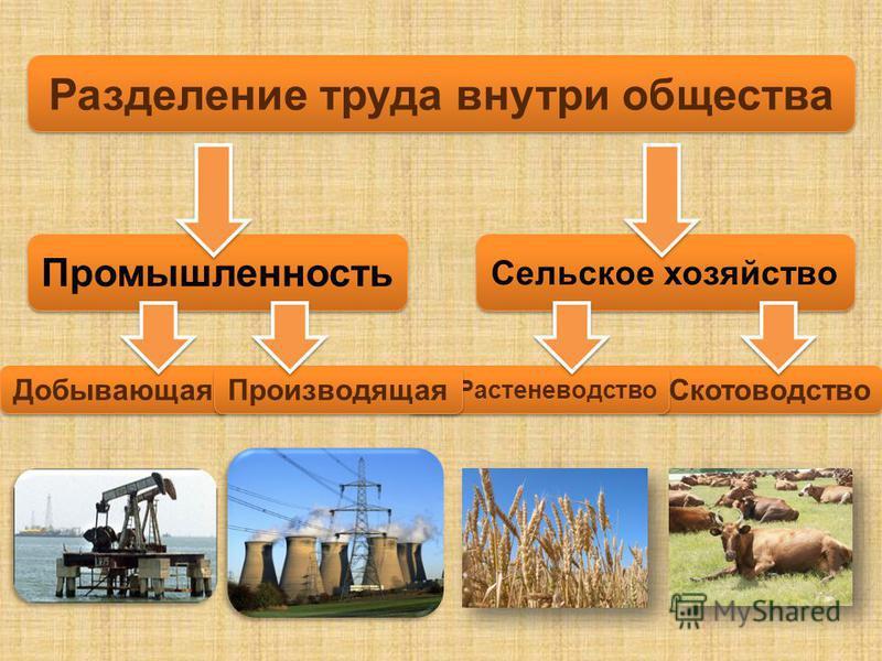 Скотоводство Растеневодство Разделение труда внутри общества Промышленность Сельское хозяйство Добывающая Производящая